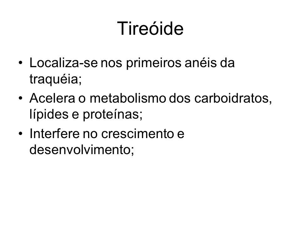 Tireóide Localiza-se nos primeiros anéis da traquéia; Acelera o metabolismo dos carboidratos, lípides e proteínas; Interfere no crescimento e desenvol