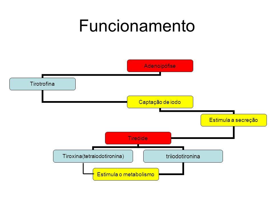 Funcionamento Adenoipófise Tirotrofina Captação de iodo Estimula a secreção Tireóide Tiroxina(tetraiodotironina)triiodotironina Estimula o metabolismo