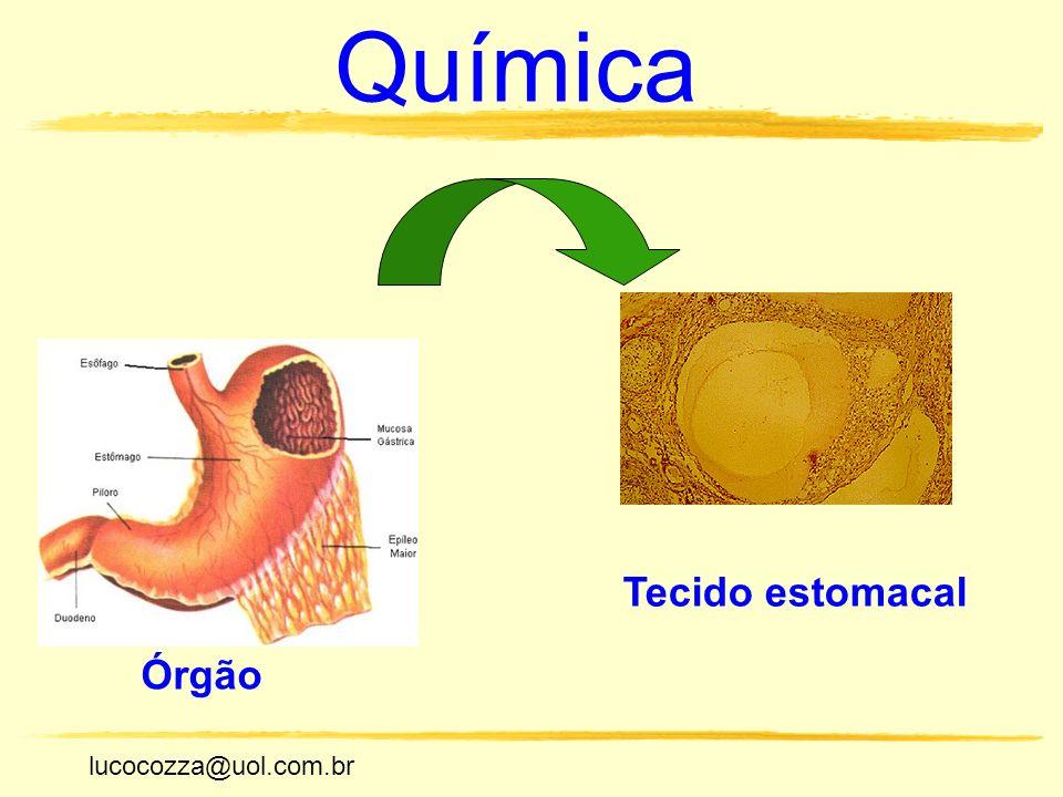 lucocozza@uol.com.br Unicamp lucocozza@uol.com.br Química Órgão Tecido estomacal