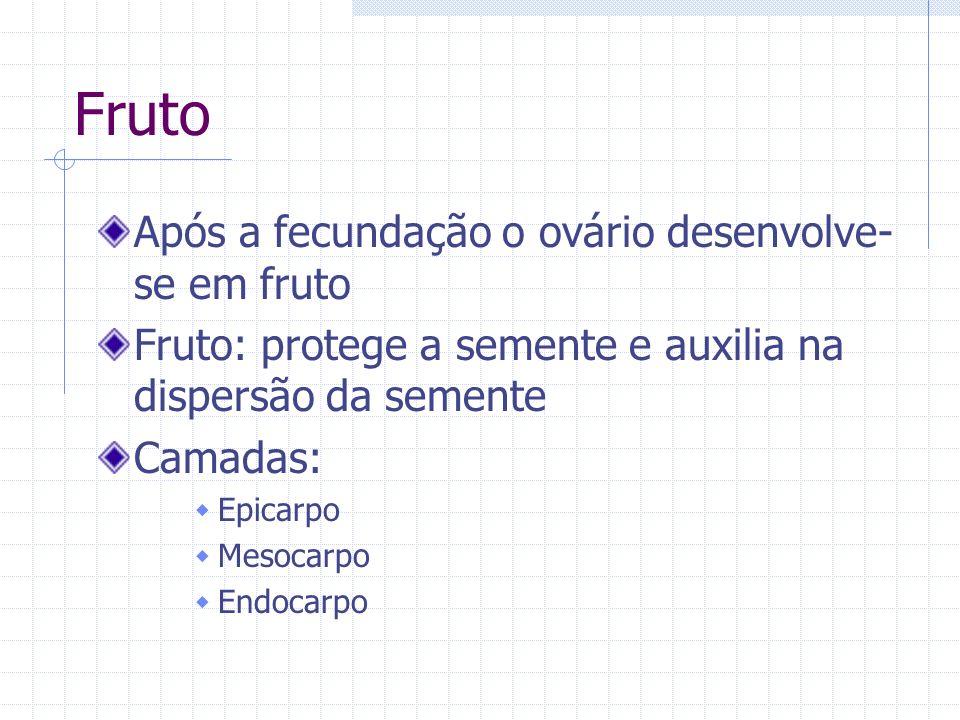 Fruto Após a fecundação o ovário desenvolve- se em fruto Fruto: protege a semente e auxilia na dispersão da semente Camadas: Epicarpo Mesocarpo Endoca