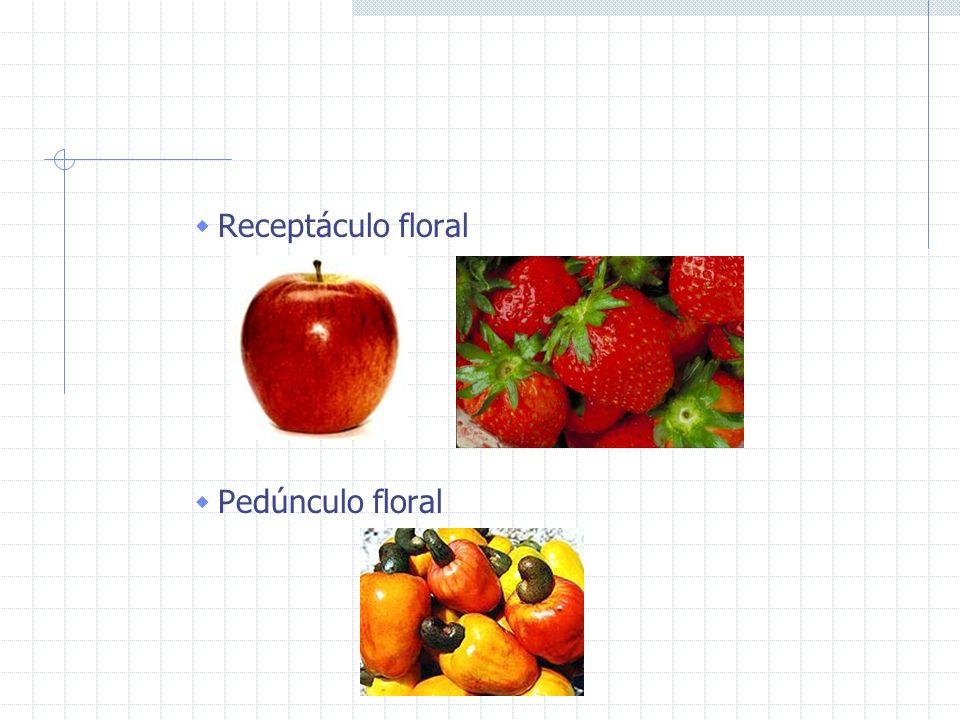 Receptáculo floral Pedúnculo floral
