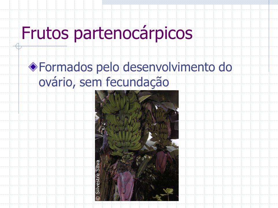 Frutos partenocárpicos Formados pelo desenvolvimento do ovário, sem fecundação