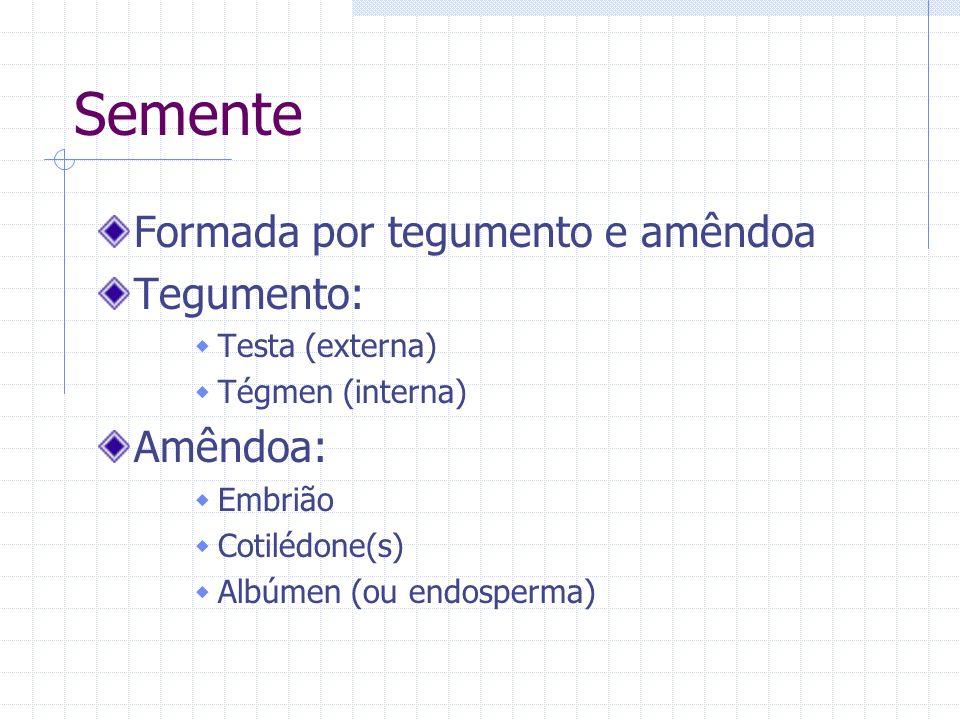 Semente Formada por tegumento e amêndoa Tegumento: Testa (externa) Tégmen (interna) Amêndoa: Embrião Cotilédone(s) Albúmen (ou endosperma)