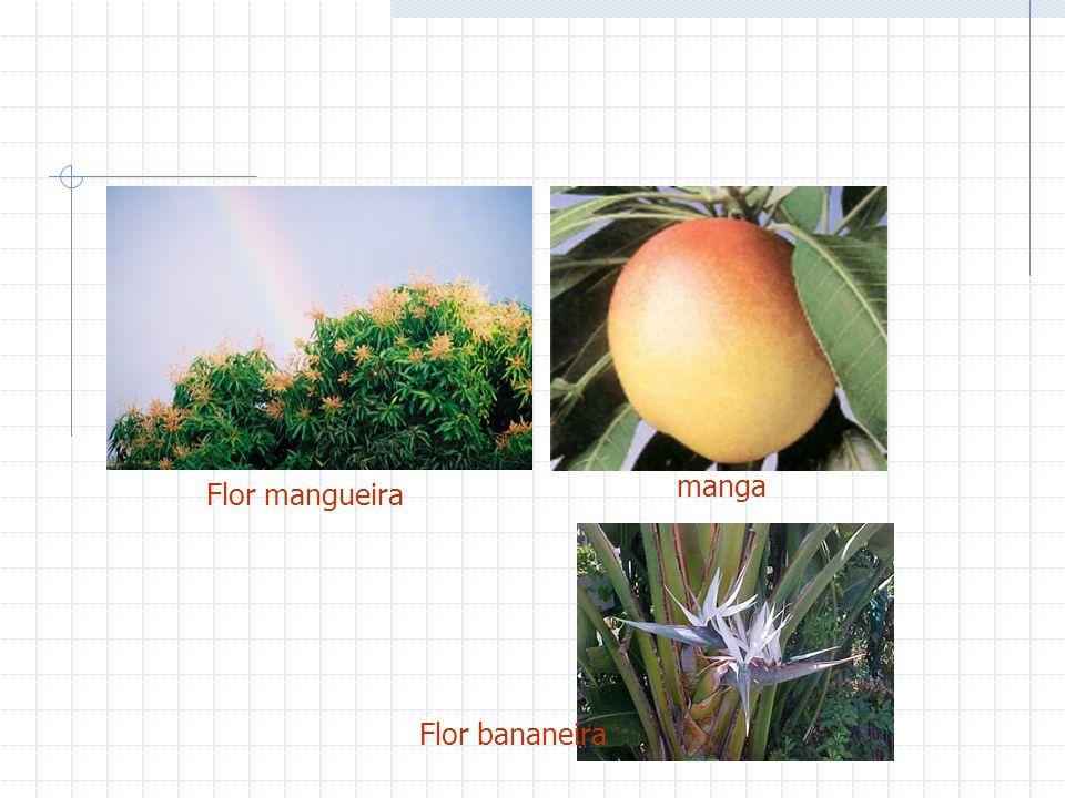 Flor mangueira manga Flor bananeira