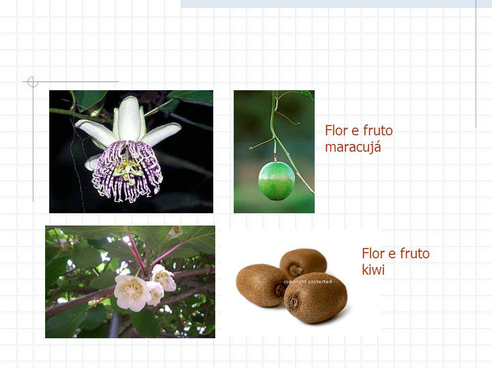 Flor e fruto maracujá Flor e fruto kiwi