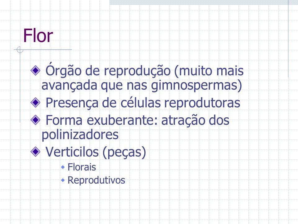 Flor Órgão de reprodução (muito mais avançada que nas gimnospermas) Presença de células reprodutoras Forma exuberante: atração dos polinizadores Verti