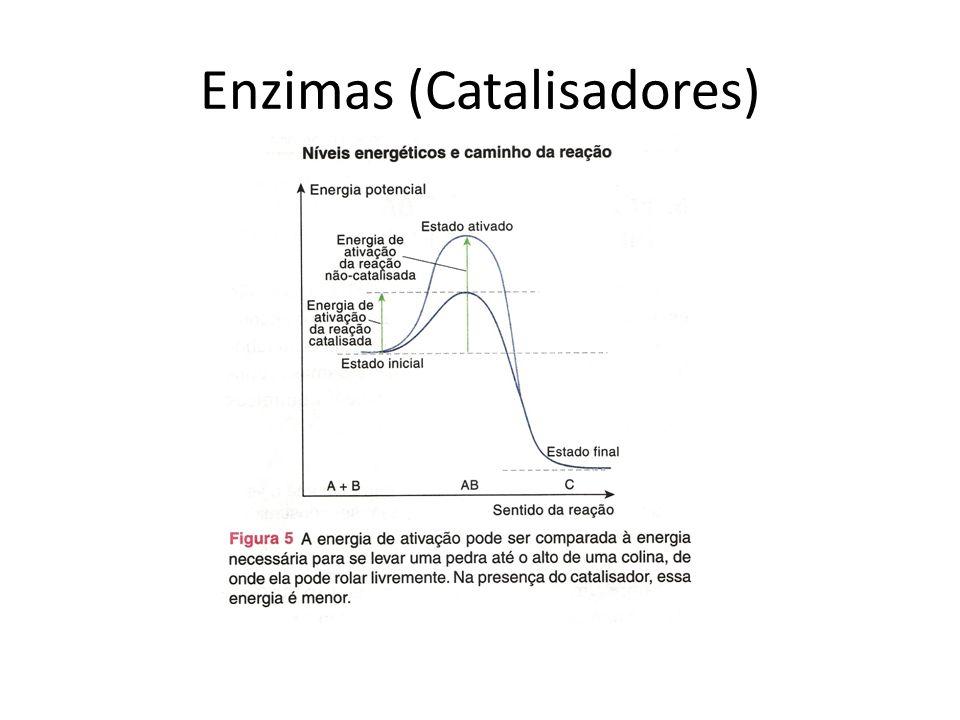 Enzimas (Catalisadores)