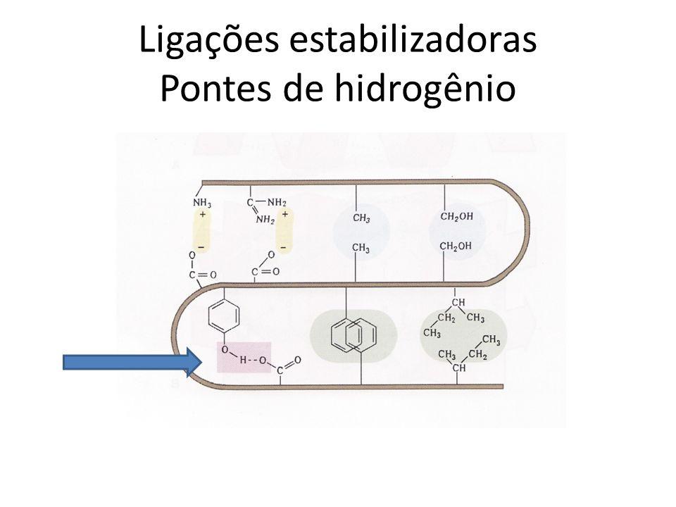 Ligações estabilizadoras Pontes de hidrogênio