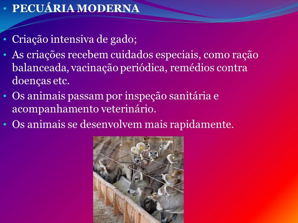 PECUÁRIA MODERNA Criação intensiva de gado; As criações recebem cuidados especiais, como ração balanceada, vacinação periódica, remédios contra doença