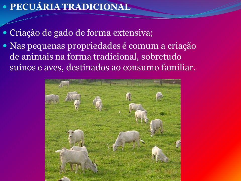 PECUÁRIA TRADICIONAL Criação de gado de forma extensiva; Nas pequenas propriedades é comum a criação de animais na forma tradicional, sobretudo suínos