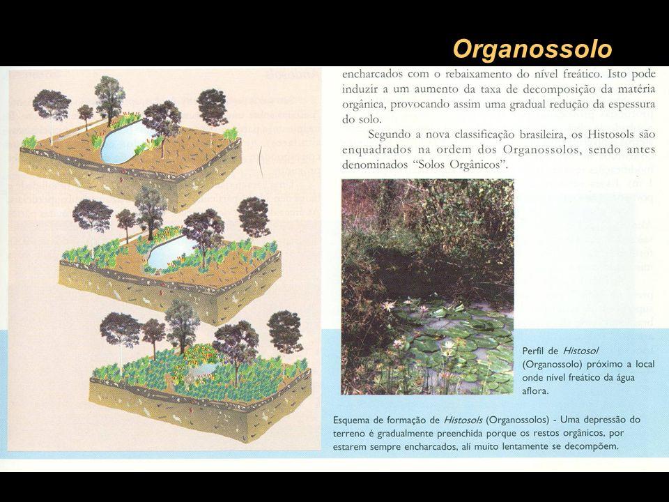 Organossolo