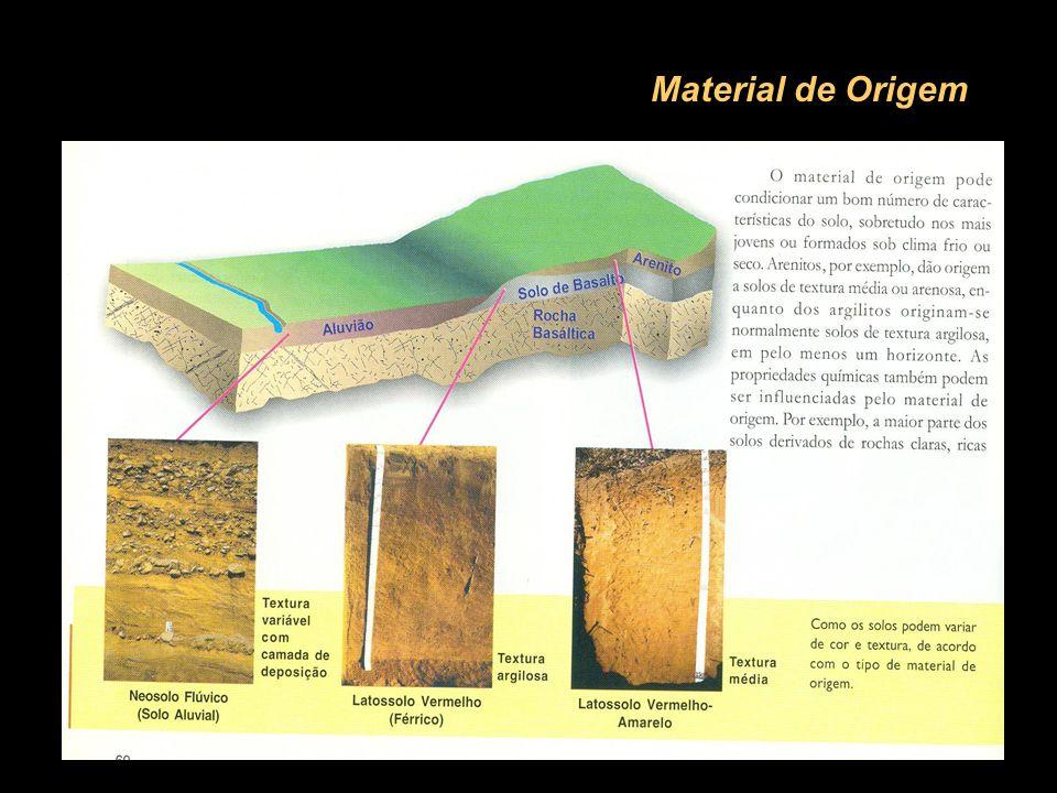 3 CAMBISSOLOS (C) Material mineral; fase embrionária; solo adolescente (pode evoluir para um Latossolo); terreno escarpado; severas restrições ao uso agrícola; elevada erodibilidade; pobres em nutrientes e ácidos.