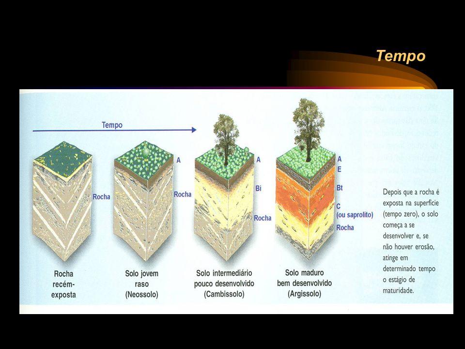 Perfil e horizontes do solo...horizonte é uma seção de constituição mineral ou orgânica, geralmente paralela à superfície, que possui propriedades geradas por processos formadores do solo.