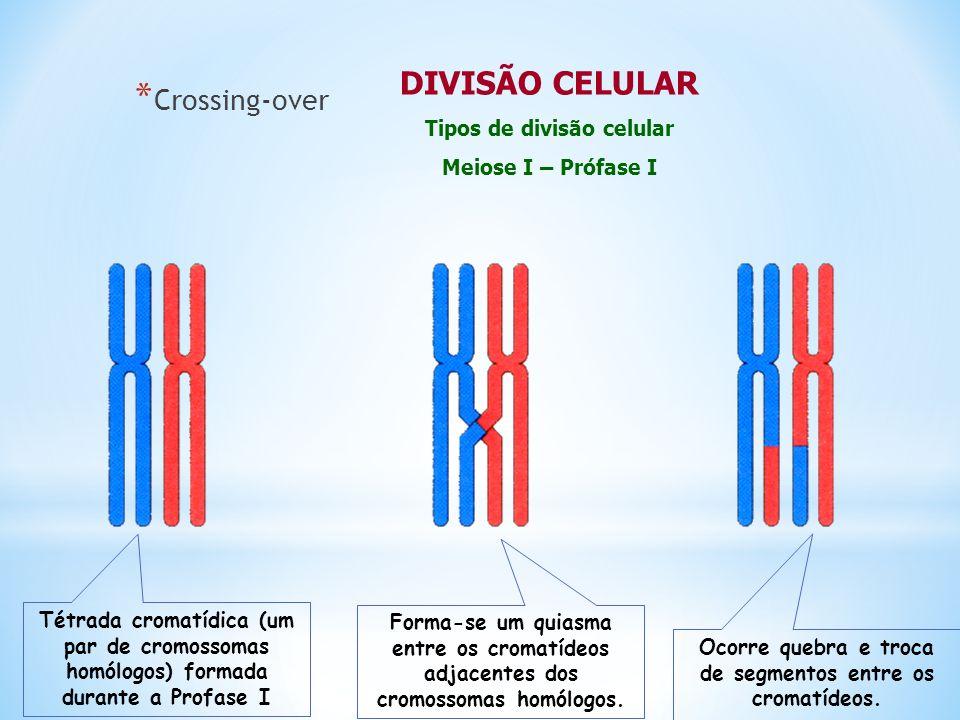 LEPTÓTENO Começo da condensação cromossômica Surgimento dos cromômeros ZIGÓTENO Pareamento dos cromossomos homólogos SINAPSE PAQUÍTENO Troca de segmentos equivalentes entre cromossomos homólogos : PERMUTAÇÃO ou CROSSING-OVER DIPLÓTENO Separação dos homólogos Surgimento dos quiasmas DIACINESE Continua a separação dos homólogos