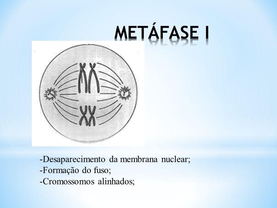* Crossing-over Tétrada cromatídica (um par de cromossomas homólogos) formada durante a Profase I Forma-se um quiasma entre os cromatídeos adjacentes