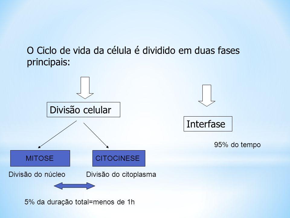 MEIOSE II Início nas células resultantes da telófase I, sem que ocorra a Intérfase