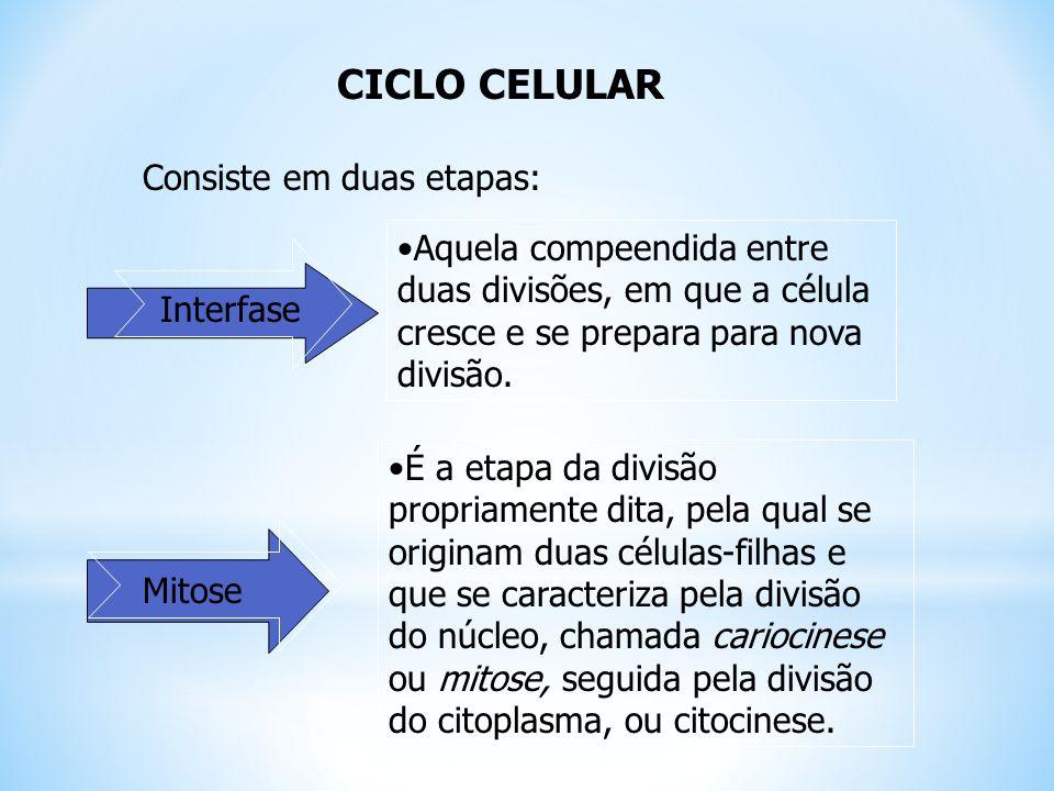 O Ciclo de vida da célula é dividido em duas fases principais: Divisão celular Interfase MITOSECITOCINESE Divisão do núcleoDivisão do citoplasma 5% da duração total=menos de 1h 95% do tempo