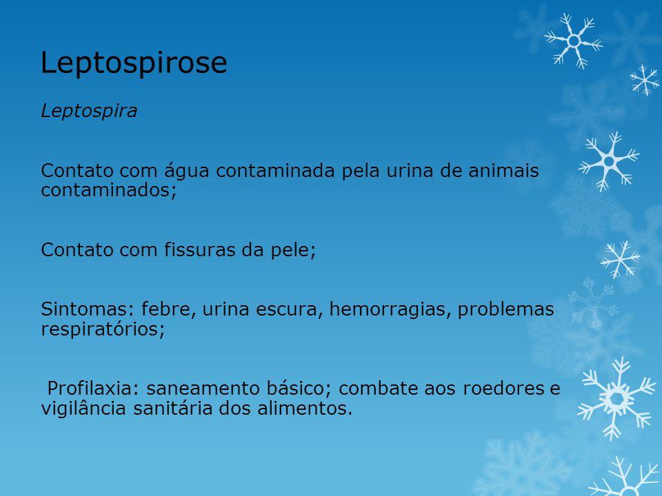 Leptospirose Leptospira Contato com água contaminada pela urina de animais contaminados; Contato com fissuras da pele; Sintomas: febre, urina escura,