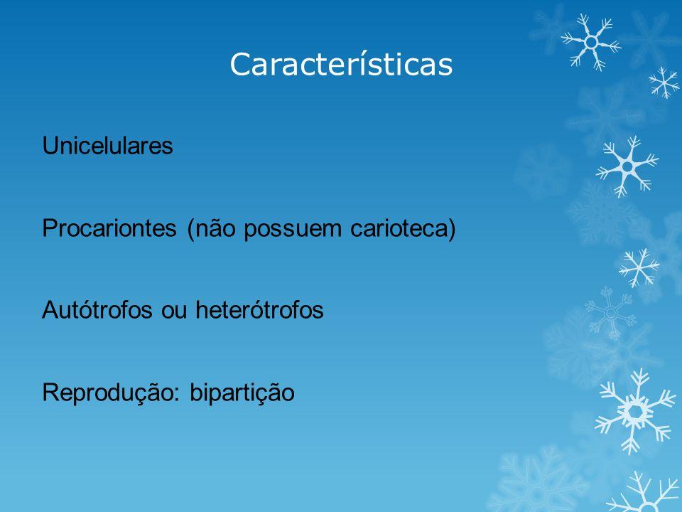 Características Unicelulares Procariontes (não possuem carioteca) Autótrofos ou heterótrofos Reprodução: bipartição