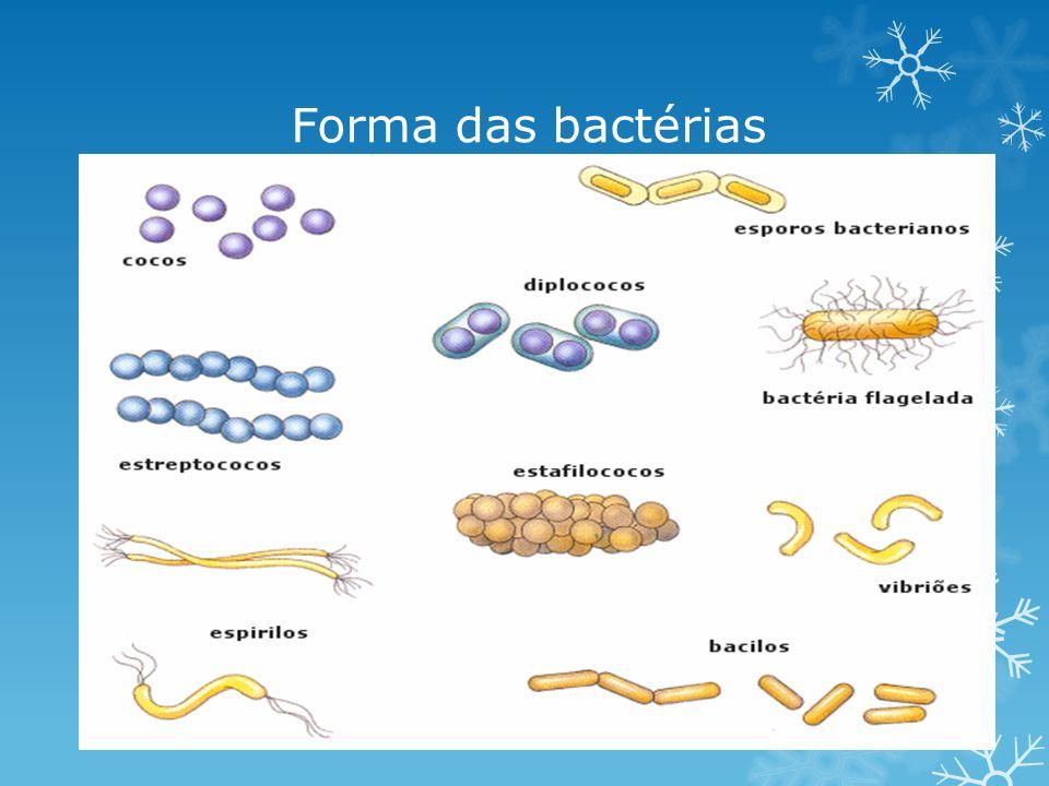Fisiologia bacteriana Nutrição: -Autótrofas (fotossíntese ou quimiossíntese); -Heterótrofas (saprófitas, parasitas ou mutualismo).