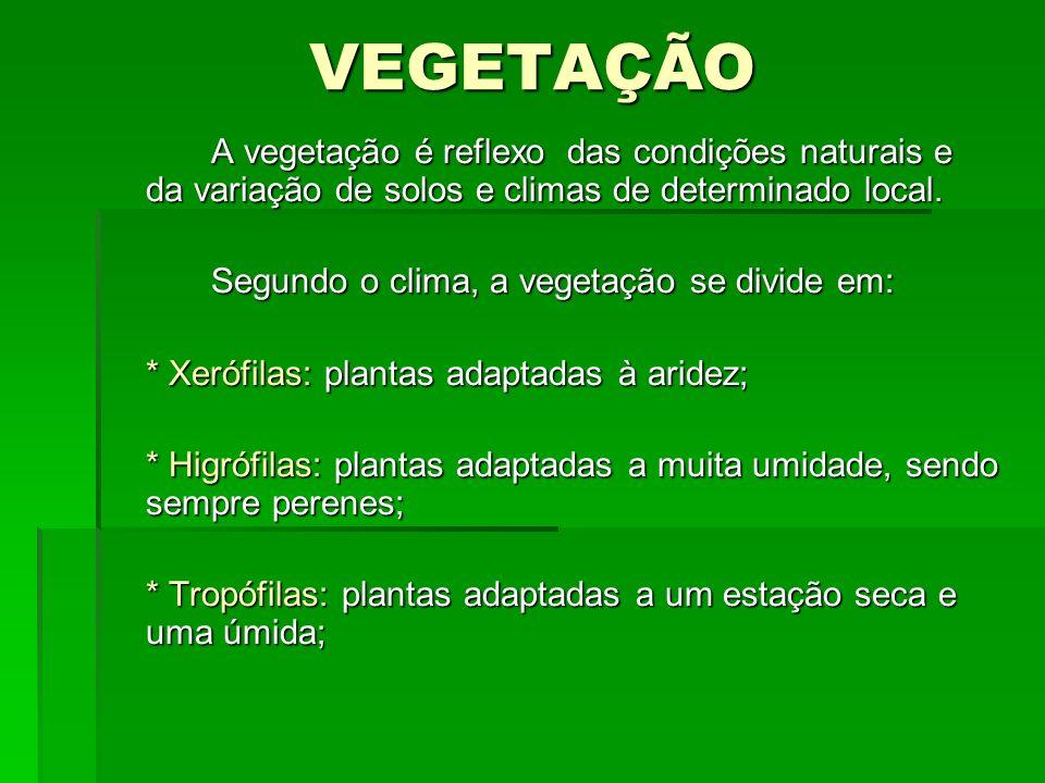 VEGETAÇÃO A vegetação é reflexo das condições naturais e da variação de solos e climas de determinado local. Segundo o clima, a vegetação se divide em