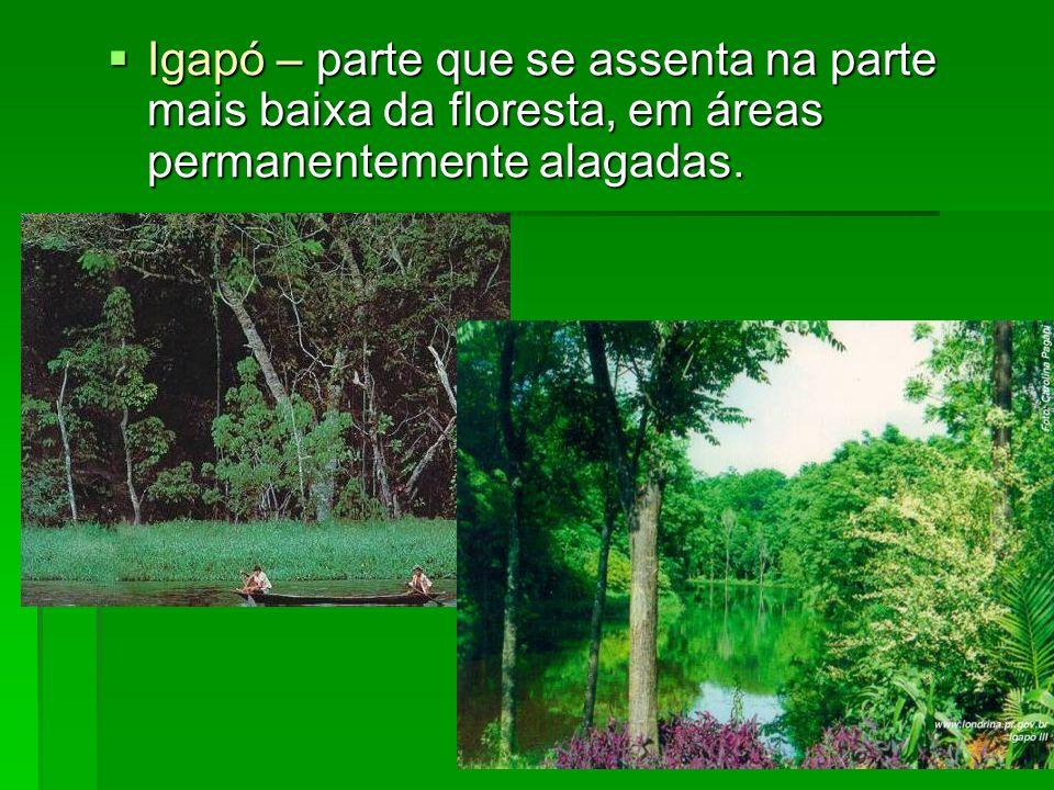 Igapó – parte que se assenta na parte mais baixa da floresta, em áreas permanentemente alagadas. Igapó – parte que se assenta na parte mais baixa da f