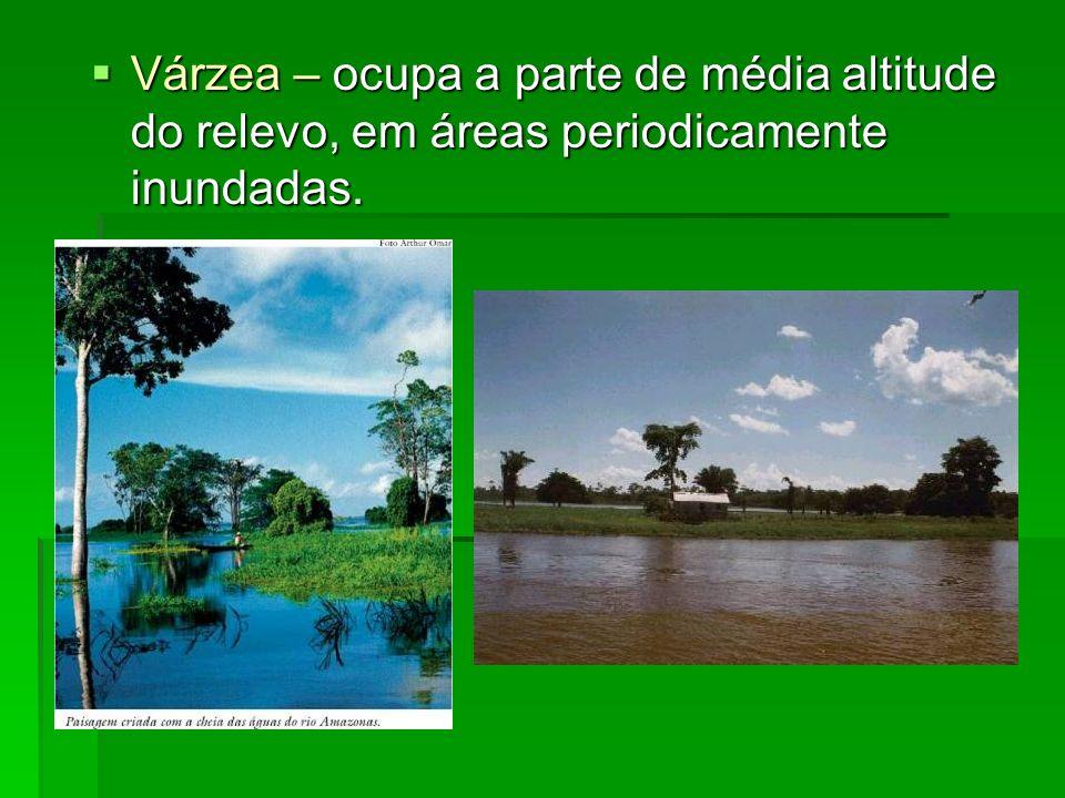 Várzea – ocupa a parte de média altitude do relevo, em áreas periodicamente inundadas. Várzea – ocupa a parte de média altitude do relevo, em áreas pe
