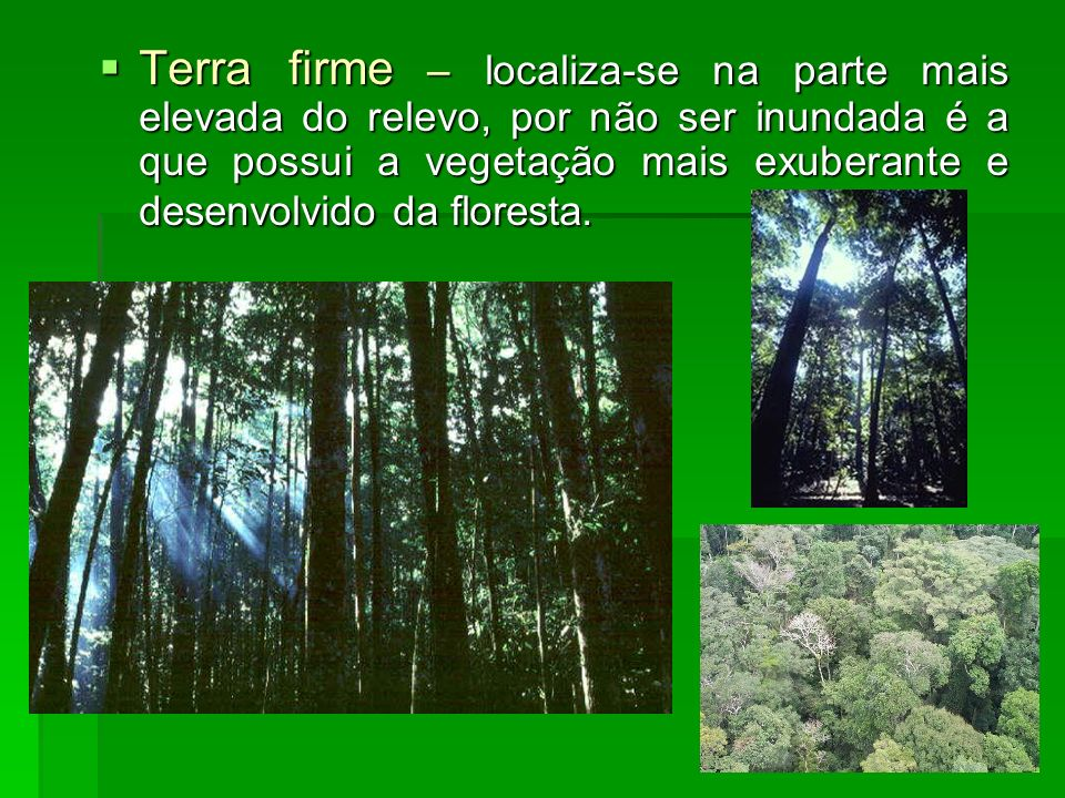 Terra firme – localiza-se na parte mais elevada do relevo, por não ser inundada é a que possui a vegetação mais exuberante e desenvolvido da floresta.