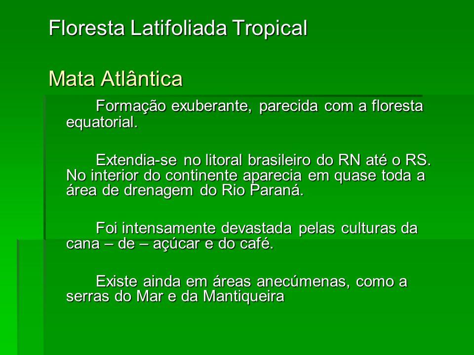 Floresta Latifoliada Tropical Mata Atlântica Formação exuberante, parecida com a floresta equatorial. Extendia-se no litoral brasileiro do RN até o RS