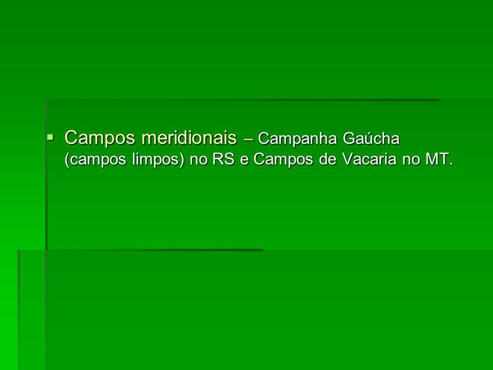 Campos meridionais – Campanha Gaúcha (campos limpos) no RS e Campos de Vacaria no MT. Campos meridionais – Campanha Gaúcha (campos limpos) no RS e Cam