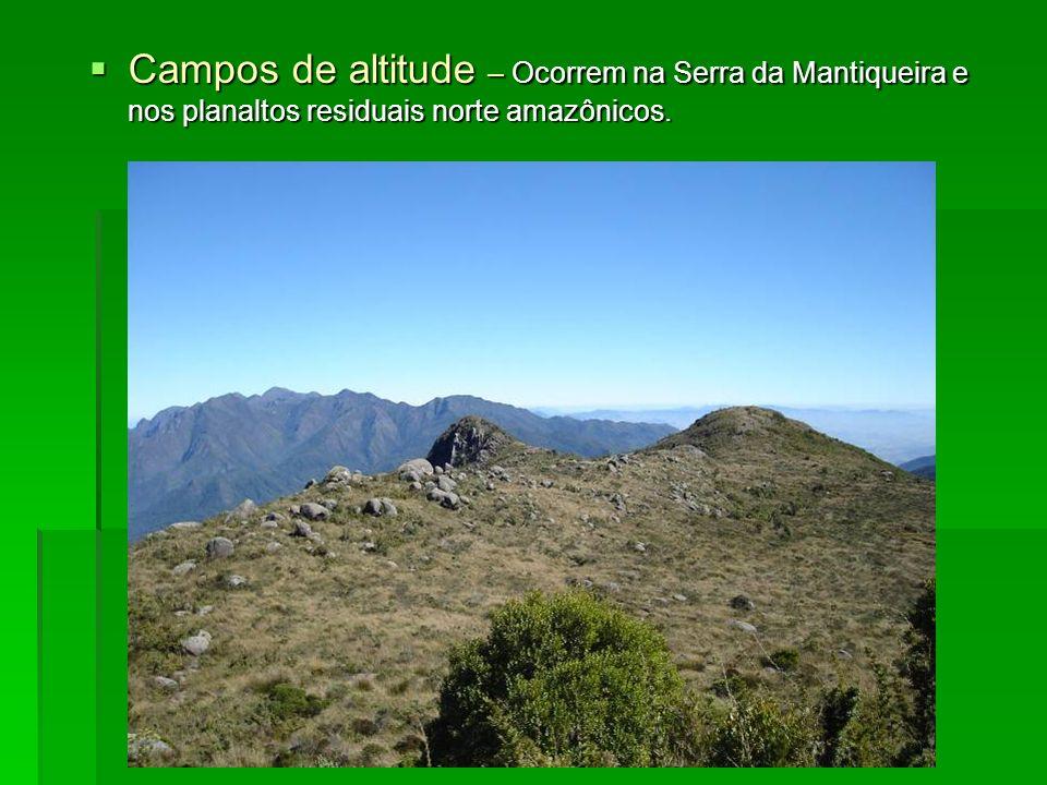 Campos de altitude – Ocorrem na Serra da Mantiqueira e nos planaltos residuais norte amazônicos. Campos de altitude – Ocorrem na Serra da Mantiqueira