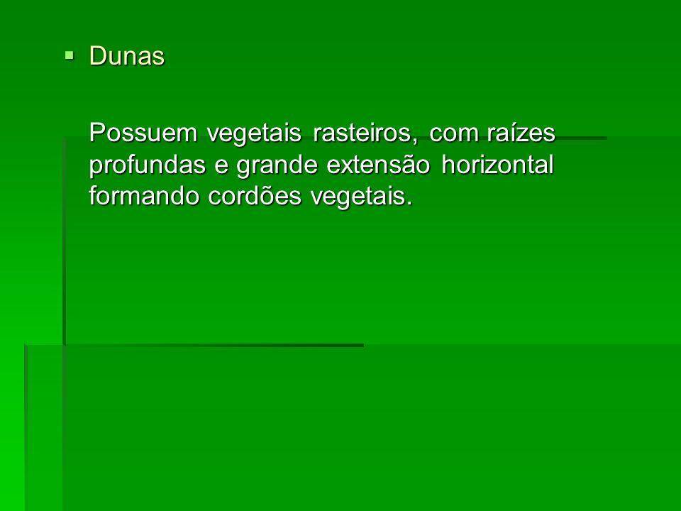 Dunas Dunas Possuem vegetais rasteiros, com raízes profundas e grande extensão horizontal formando cordões vegetais.