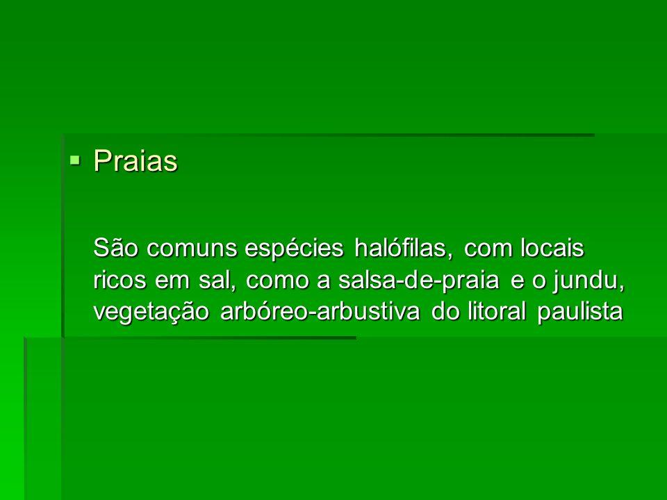 Praias Praias São comuns espécies halófilas, com locais ricos em sal, como a salsa-de-praia e o jundu, vegetação arbóreo-arbustiva do litoral paulista