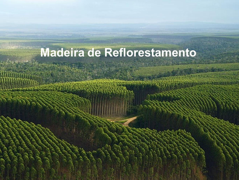 Madeira de Reflorestamento