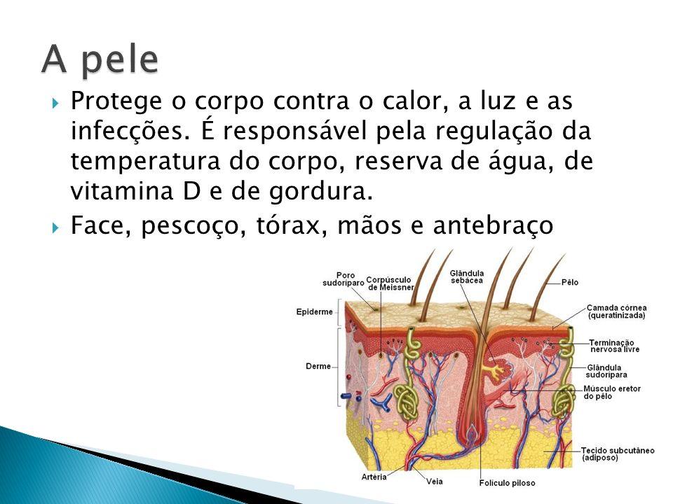 Protege o corpo contra o calor, a luz e as infecções. É responsável pela regulação da temperatura do corpo, reserva de água, de vitamina D e de gordur