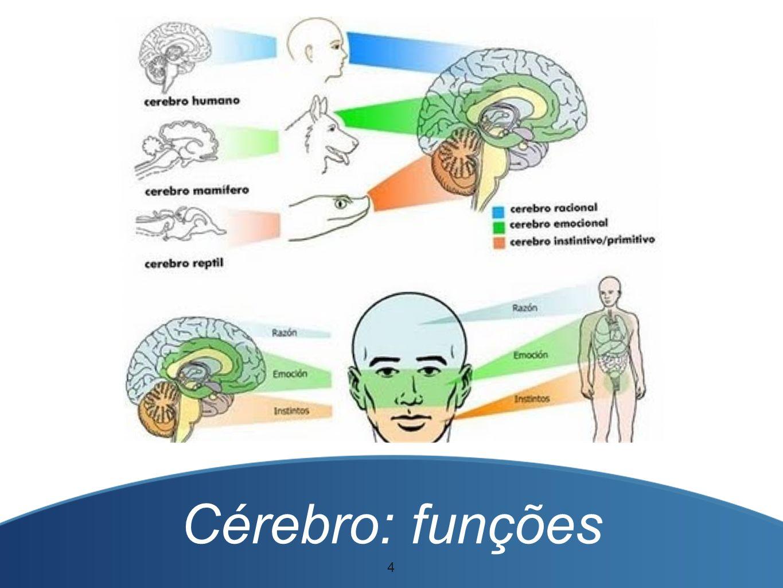 Cérebro: funções 4