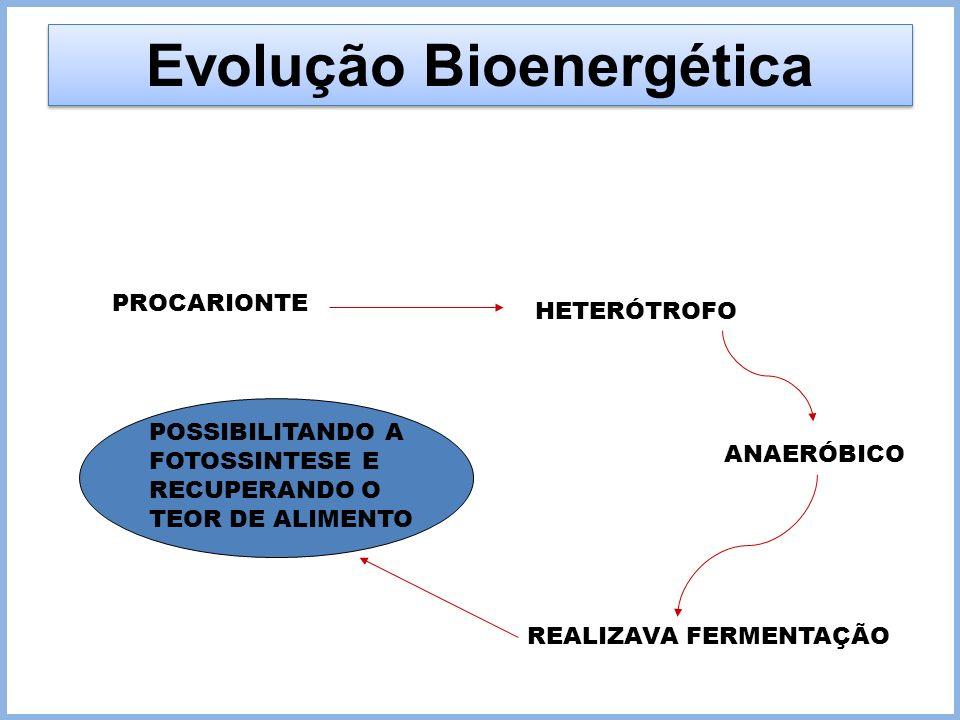 Evolução Bioenergética PROCARIONTE HETERÓTROFO ANAERÓBICO REALIZAVA FERMENTAÇÃO POSSIBILITANDO A FOTOSSINTESE E RECUPERANDO O TEOR DE ALIMENTO