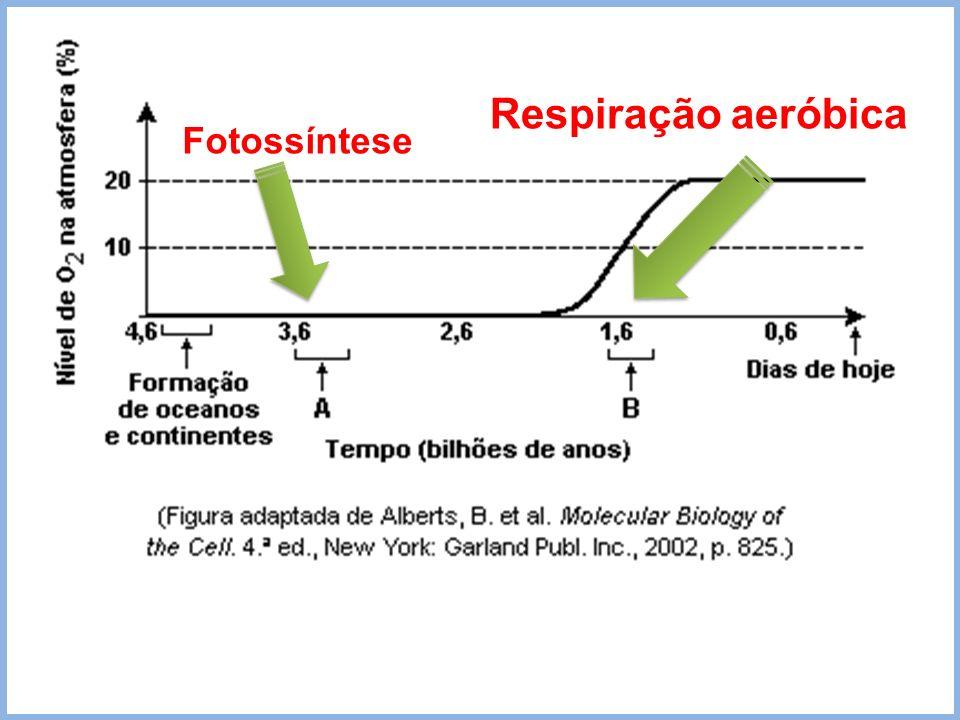 Fotossíntese Respiração aeróbica