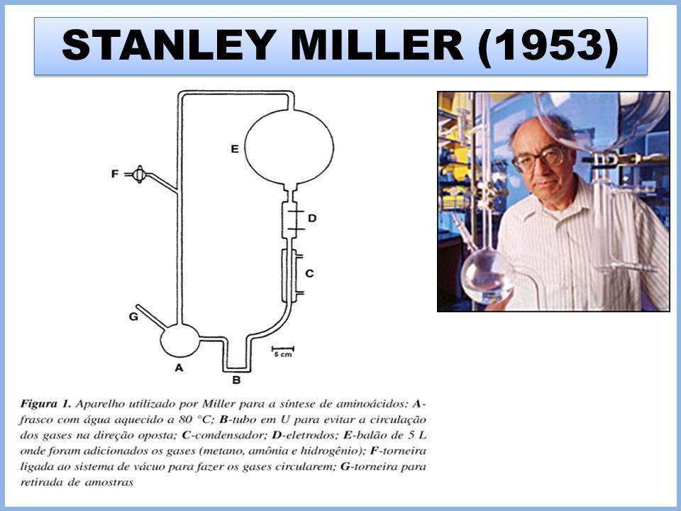 STANLEY MILLER (1953)
