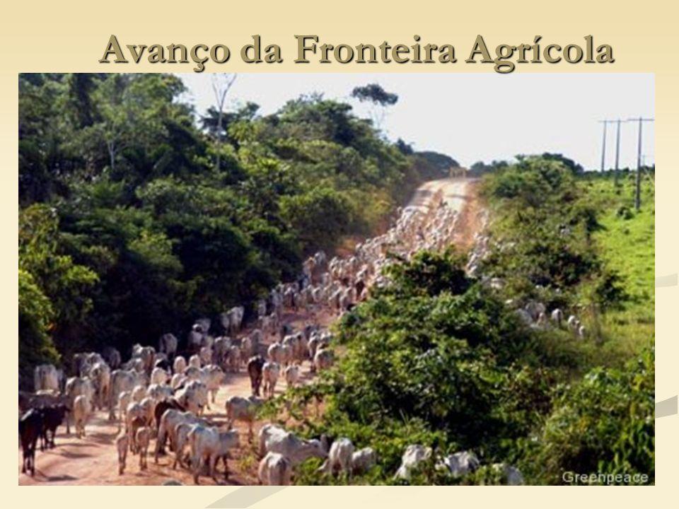 Avanço da Fronteira Agrícola