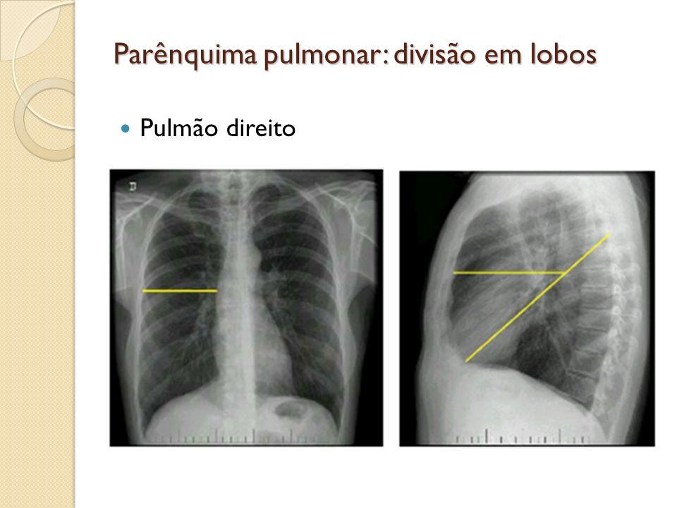 Parênquima pulmonar: divisão em lobos Pulmão direito