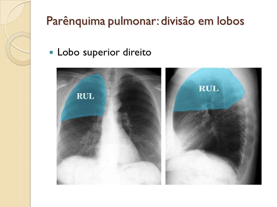 Parênquima pulmonar: divisão em lobos Lobo superior direito