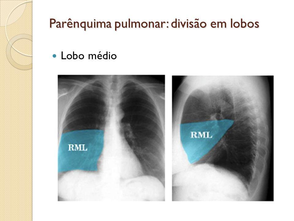 Parênquima pulmonar: divisão em lobos Lobo médio
