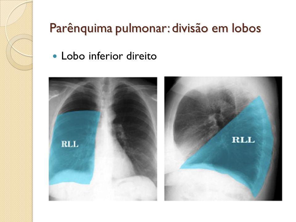 Parênquima pulmonar: divisão em lobos Lobo inferior direito