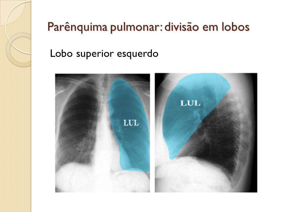 Parênquima pulmonar: divisão em lobos Lobo superior esquerdo
