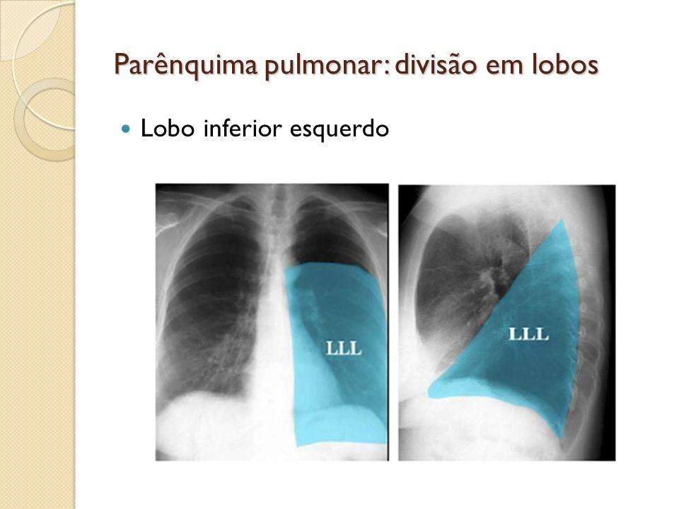 Parênquima pulmonar: divisão em lobos Lobo inferior esquerdo