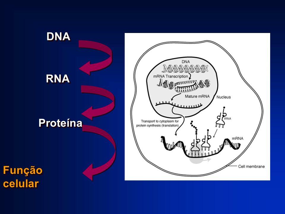 DNADNA RNARNA ProteínaProteína Função celular