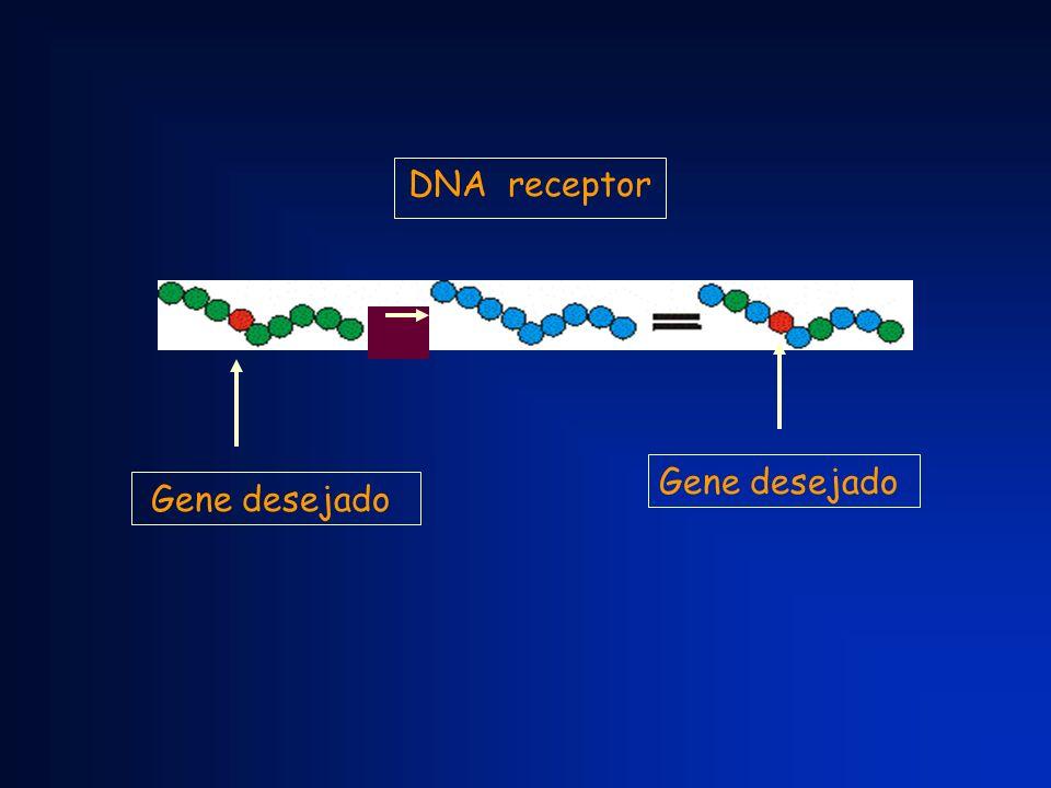 DNA receptor Gene desejado