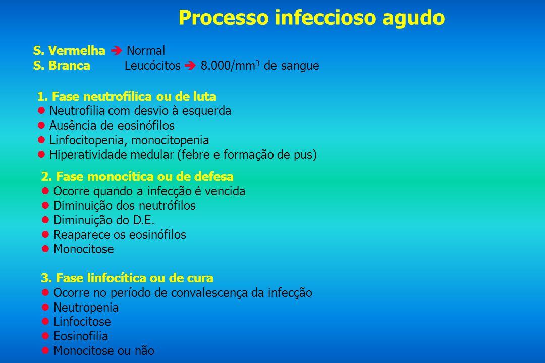 Processo infeccioso agudo S. Vermelha Normal S. Branca Leucócitos 8.000/mm 3 de sangue 1. Fase neutrofílica ou de luta Neutrofilia com desvio à esquer