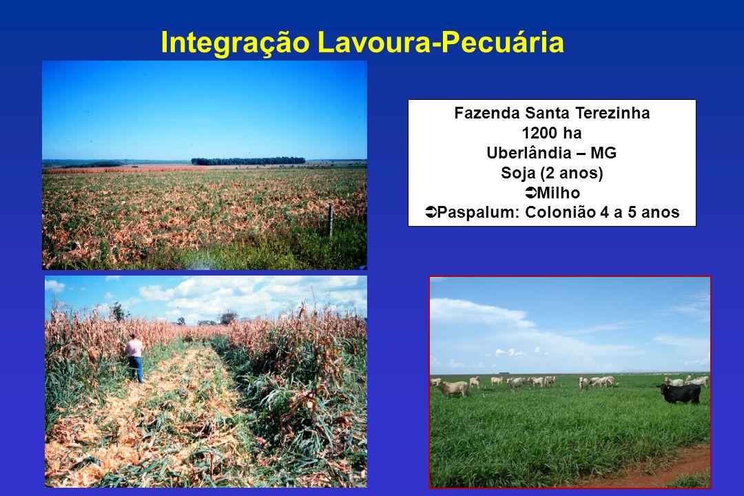 Fazenda Santa Terezinha 1200 ha Uberlândia – MG Soja (2 anos) Ü Milho Ü Paspalum: Colonião 4 a 5 anos Integração Lavoura-Pecuária